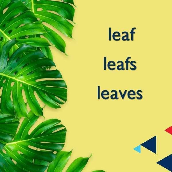 leaf & leafs & leaves
